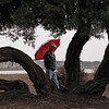 Umbrellas come out for rainy weather in Alameda