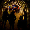 OAKLAND ZOO ZOOLIGHTS