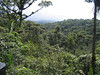 w Arial view of the Rain Forest
