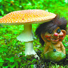 false blusher mushroom troll in thursday dave milne july 27 05 A clay troll lounges under a huge poisonous Panther Amanita mushroom measuring more than 15cm high and 15cm across. Also called a False Blusher the mushroom is one of many showing themselves because of the wet weather. many are edible but all should be avoided without a sound knowledge of which is which.