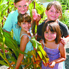 Meghan Langlois, 8, bottom left, Frankie Bella,10, Cassie Langlois, 9, and Kimberly Langlois, 5, were 'children of the corn' and many other vegetables like beans, peas, sunflowers, and tomatoes. Here they show an Indian Corn plant, one of 68. The vegetables are an Austin Road Elementary School project and are growing at Trish Bella's house over the Summer. The plants will be displayed at the PGX, then will go back to school at Austin Road. Corn kids, Friday, David Mah