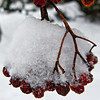 Frozen berries anyone?