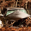 11-24-2011, MVC With Entrapment, Franklin Twp, Dutch Mill Rd  and Chestnut Ave  (C) Edan Davis, sjfirenews com (15)