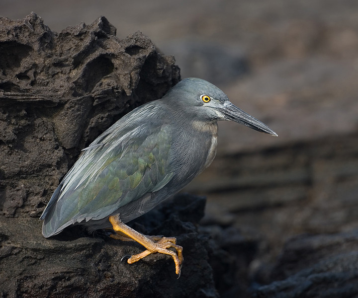 Third Place Lava Heron Mike Landwehr