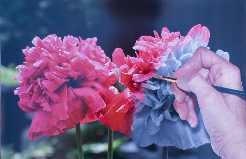 2nd - Painting Poppies - Michelle Vold - GCC