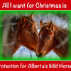 Sandie's  Christmas Card Alberta Wild Horses - I took this picture about 2 weeks ago and Sandie from https://www.facebook.com/FreeSpiritSanctuary made it into this Christmas Card.