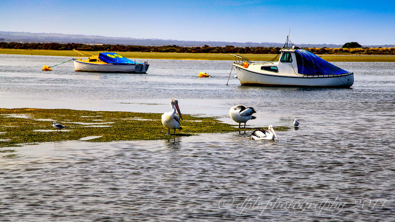 Boats, Pelicans and Seagulls
