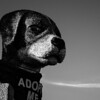 Rose Parade: Follow The Stars -- Adopt A Pet!