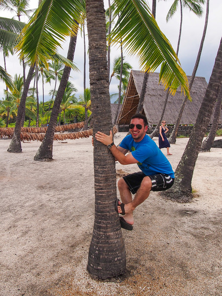 Trying to climb a palm-tree