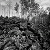 Lava Field Forest