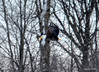 FSC_1042 Bald Eagle Dec 13 2013