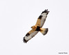 FSC_1635 Rough-legged Hawk Dec 27 2013