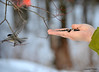 DSC_1925 Chickadee Feb 22 2013