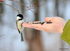 DSC_1923 Chickadee Feb 22 2013