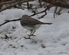 DSC_1168 Junco Feb 13 2013