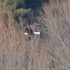 DSC_3519 Bald Eagle Mar 28 2013