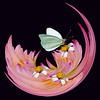 First Place<br /> Butterfly in Pink<br /> Della Landheer