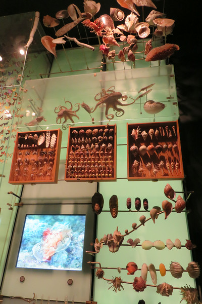 Cool display of sea life