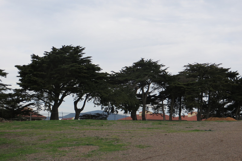 Beautiful trees in Fort Mason