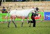 14-09-29_Red_56462-A