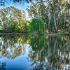Still Pond ~ Wangaratta River