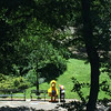 Lonely Big Bird in Central Park