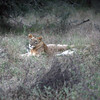 Amy Sweeney photo<br /> Kruger Park, South Africa.<br /> May 2014