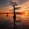A Typical Blue Cypress Lake Sunrise