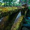 A moss covered bridge at the beginning of Oneonta Gorge