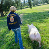 Rebecca Pierachini and her pig Starbucks. (Nathan DeHart-Ukiah Daily Journal)