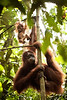 Mother and baby hang out in the trees as we move along on our way deeper into the jungle.