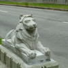 lion protector