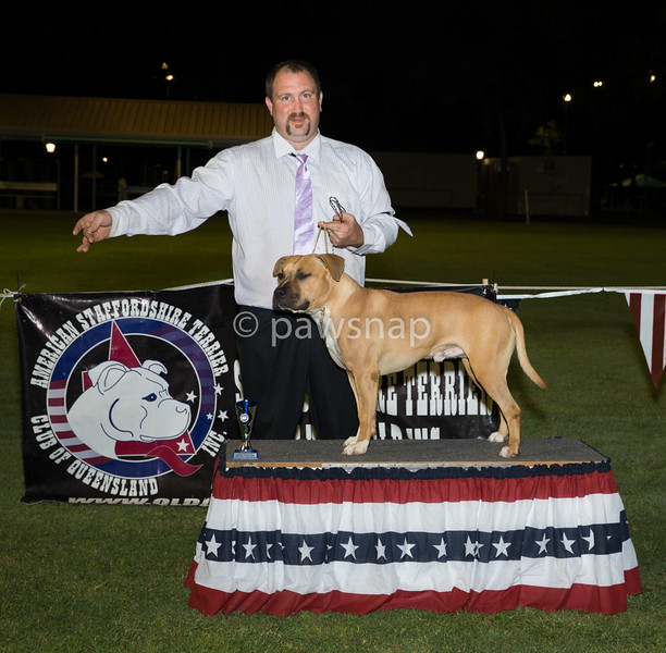 Opposite State Bred In Show