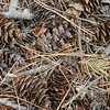 Forest Floor - Stehekin 8-19-14 Day 231
