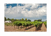 New Clairvaux Vineyard 5x7h_Folded_Front