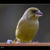 15/52 B  GREENFINCH