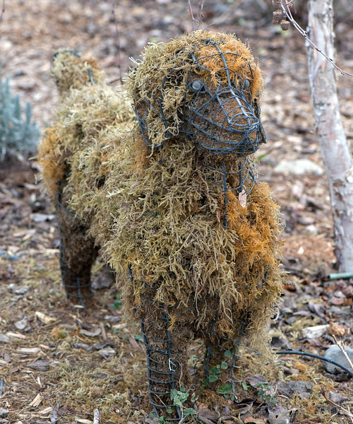 Chia Dog is looking a bit scraggly.