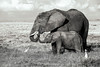 Elephant with baby in Amboseli National Park