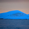 "This is a ""dome"" type iceberg, which has a rounded top.  This one also has a small group of Penguins on it."