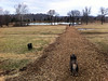 Elliot & Ollie @ Fort Smith Dog Park, Arkansas 2-16-2011