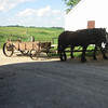 Amish Manure Spreader