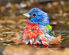 Wet Painted Bunting<br /> 333-544-444-34<br /> accepted<br /> Donald  Tan