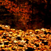 Fallen leaves on small pond