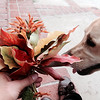 Dogs Smell Fall