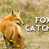 Fox Catcher Slideshow with Music