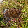 A Weka introduced himself while we are at the high point.