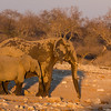 Elephant cow and calf  at Klein Namutoni waterhole, Etosha National Park, Namibia, Africa