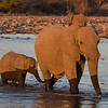 Elephant herd and calf bathing at Klein Namutoni waterhole, Etosha National Park, Namibia, Africa