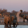 Elephants dusting themselves at Klein Namutoni waterhole, Etosha National Park, Namibia, Africa