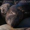Elephant Seals<br /> Big Sur, California<br /> 1401BS-ES3